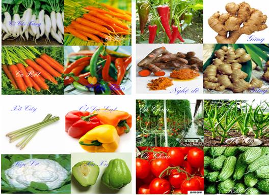 những thực phẩm cho người đau dạ dày